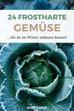 24 Gemüse, du im Winter anbauen kannst - Du hast gerade erst deine Tomaten gepflanzt und jetzt erzähle ich dir von Gemüse für den Wintergarten? Ja! Egal ob Gemüsebeet, oder Gewächshaus, jetzt ist der richtige Zeitpunkt dein Wintergemüse vorzuziehen oder zu säen! Zu meinen Lieblingen gehören Salate (Chicoree, Wirsing, Rucola oder Postelein), Kohl (Weißkohl, Rotkohl oder Grünkohl) oder andere Gemüse wie z.B. Radieschen, Lauch oder Kohlrabi. #Wintergemüse #Selbstversorger #Wurzelwerk