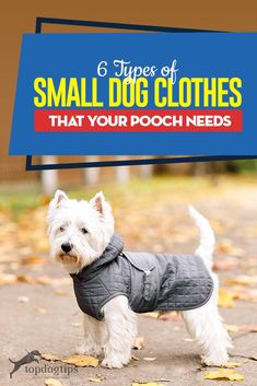 6 Types of Small Dog Clothes That Your Pooch Needs