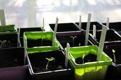 J'ai récemment donnée un atelier à plusieurs de mes collègues de travail sur le thème des »semis et potager urbain». Afin de faire profiter un plus large auditoire des conse… Afin, Co Workers, How To Plan, Backyard Farming, Urban, Atelier