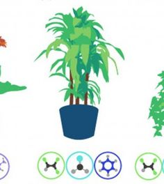Best Air-Filtering Plants, According to NASA - Kids Safety Network