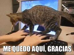 """¡Hoy es miáucoles! Esta semana el gato se acuesta en el teclado y dice: """"Me quedo aquí, gracias""""."""