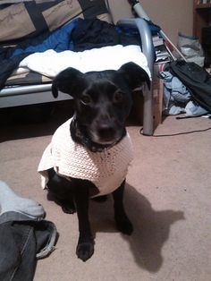 No gauge, yarn or hook size given because to can use what you want for this dog coat