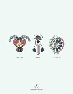 Prostate Penis Testicular Anatomy - Designs by Duvet Days Anatomy Illustrations Pelvis Anatomy, Lung Anatomy, Heart Anatomy, Brain Anatomy, Anatomy Art, Pregnancy Art, Pregnancy Videos, Ectopic Pregnancy, Pregnancy Pictures