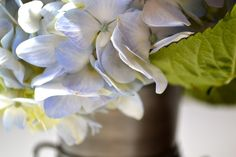 Up close with hydrangeas.