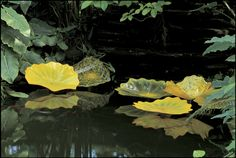 Dale Chihuly, Persian Pond, Garfield Park Conservatory, 2001