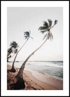 Beautiful motif of a peaceful beach in Sri Lanka. The poster comes in earthy tones that are wonderfully broken against the white Poster Shop, Poster Prints, Wall Prints, Art Print, Photo Pop Art, Poster 40x50, Gold Poster, Buy Posters Online, Prints Online