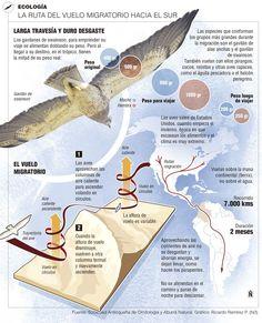 En Medellín vuelan aves migratorias Esta semana es clave para apreciar en los cielos miles de aves en bandada.