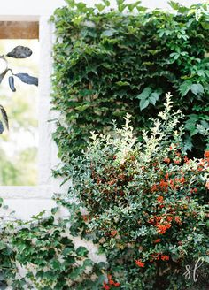 Photo from Mr. & Mrs. Peffer collection by Shining Light Photography.  Urban Gardens of Apiary in Lexington Kentucky.