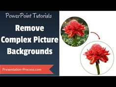 Learn how to quickly and easily remove even complex Picture backgrounds in PowerPoint 2013 and This tutorial goes beyond the regular tool i. Computer Projects, Computer Basics, Computer Help, Computer Tips, Powerpoint Tutorial, Powerpoint Tips, Microsoft Powerpoint, Teaching Aids, Teaching Tools