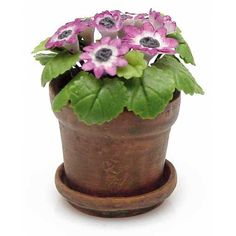 Miniature Potted Primrose Plant
