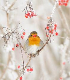 #bird