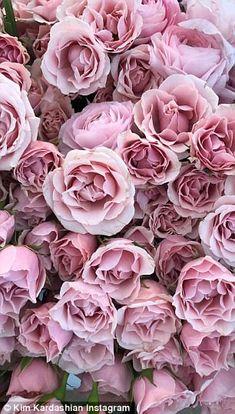 Wallpaper Iphonepink Rosesbeautiful Wallpapers Pinterest