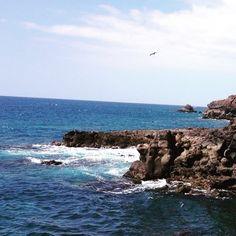 @EttingerLondon #Seagull#Tenerife #CanaryIslands #summertime #travel #islascanarias #thisissummer #DCmoments #MyColourOfSummer #MyHappyPlace #landscape #bluesea #bluesky #anchorandcrew #beautifulisland