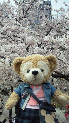 桜満開だね♡
