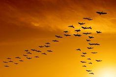 1-aves-fractal