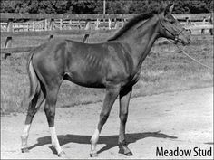 secretariat horse | Hangin' With Haskin | When Big Red Was Little Red | BloodHorse.com ...