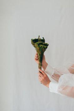 Lieferzeit 3-5 Tage Unsere Brunia Albiflora, auch Kaffeebusch genannt, versprüht einen exklusiven Charme. Die kugelförmigen... Kugel, Florals, Ballet Skirt, Shop, Fashion, Pink, Glamour, Nice Asses, Things To Do