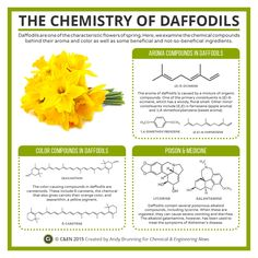 Spring is here, so this month's graphic in C&EN looks at daffodils, and the colour, aroma, poisonous, and medicinal compounds they contain: http://goo.gl/SaJKBt