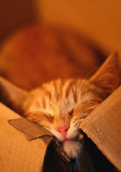 cats and boxes, the smaller the better.
