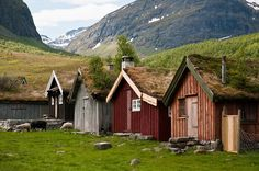 Cubiertas vegetales casi naturales en el fiordo Geiranger, Noruega
