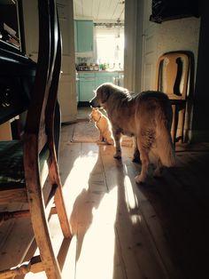 Our Dog Saga and cat Ragnar.