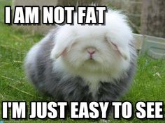 Easy to see! #rabbit #rabbits #cuteanimals #cuteanimal #bunny #bunnies #pet #pets