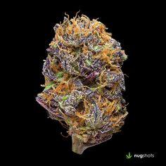 Sour Grape Cannabis Strain
