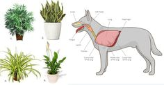 These 11 Plants Purify the Air from Cancer- Causing Chemicals AND are Safe for Cats and Dogs