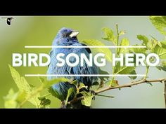 (106) Bird Song Hero: The song learning game for everyone - YouTube