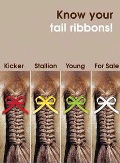 Know your tail ribbon colors! and take those red ones seriously! Kicks can injure riders and horses and a scuffle can casue other horses to spook and their riders to fall! Know your ribbons!!