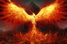Hi, I'm Phoenix. The only living Phoenix dragon to be known. I have fire power, I can lay these white eggs with flames on them, I am kinda mean at first but when you get to know me I am nice. Fantasy Animal, Fantasy Art, Rise From The Ashes, Phoenix Rising, Dark Phoenix, Fire Art, Mythological Creatures, Magical Creatures, Fairytale Creatures