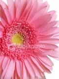 Flower arrangements ....Pink gerberas...my fave