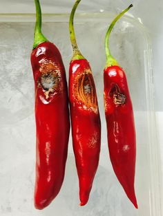 Scientists have identified four new pathogens previously not found in Australian chilies, raising the stakes for the country's quarantine and disease resistance efforts.