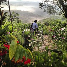 Sierra Gorda Ecotours - Posada James Xilitla