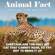 Animal Facts | Funny Or Die