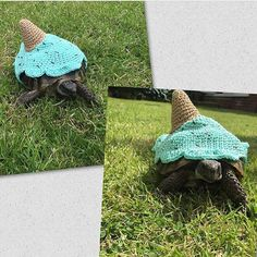 Red Footed Tortoise, Cute Tortoise, Baby Tortoise, Sulcata Tortoise, Turtle Costumes, Pet Costumes, Cute Turtles, Baby Turtles, Tortoise House