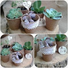 Succulent or herb seedlings in eco pots make a cute wedding favour, place name or table decoration. Available now from Bloom Art
