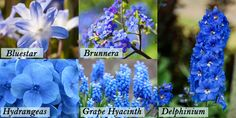 Don't Be Blue: Popular Types of Blue Flowers « Blooms Today