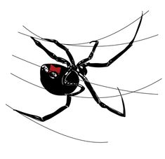 How to Draw a Spider – Black Widow Step by Step