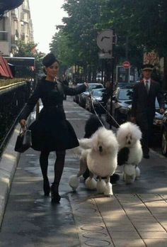 Avenue Montaigne. Only in Paris.  Beautiful white French Poodles.