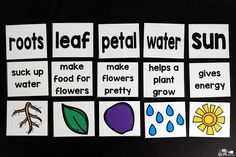 Engage your class in an exciting hands-on experience learning all about plants! Plants Unit (PowerPoint, Lessons, Printables) is perfect for classrooms! Kindergarten Units, Kindergarten Learning, Kindergarten Activities, Plant Crafts, Plant Projects, Parts Of A Flower, Parts Of A Plant, Craft Activities For Kids, Science Activities
