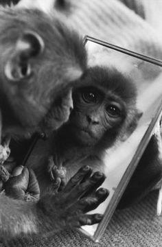 Photos d 39 animaux sauvages captur es de mani re inattendue for Se voir dans un miroir
