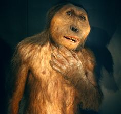 Change of Diet of Early Humans Ancestors 3.5 million years ago!!!!!!!!!