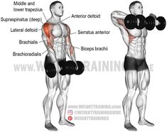 Dumbbell wide-grip upright row exercise instructions and video Best Shoulder Workout, Best Chest Workout, Chest Workouts, Good Back Workouts, Back Exercises, Shoulder Exercises, Chest Exercises, Weight Training Programs, Weight Training Workouts