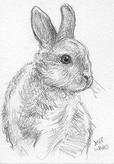 ACEO easter bunny rabbit sketch