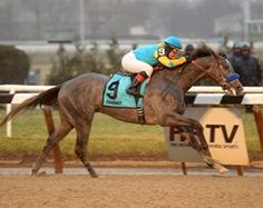 San Diego Horse Race » El Kabeir Towers Over Field in G3 Withers at Aqueduct Saturday