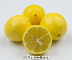 Lisbon Lemon - Search by flavors, find similar varieties and discover new uses for ingredients @ preppings.com