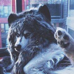 SpiritHoods® Official Website | The Grey Wolf SpiritHood