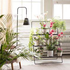 Viherporras - Kekkilä Plants, Gardening, Lawn And Garden, Plant, Planets, Horticulture