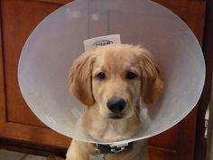 Cute cone of shame!